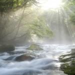 Cascading Stream under Sunlight in Forest